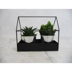 Arrangement cactus