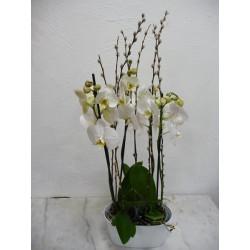 Composition 2 orchidées...