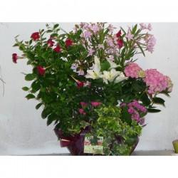 Coupe de plantes n°4
