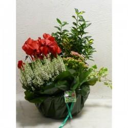 Coupe de plantes n°1