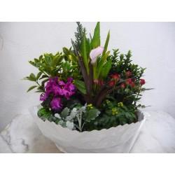 Coupe de plantes N°2